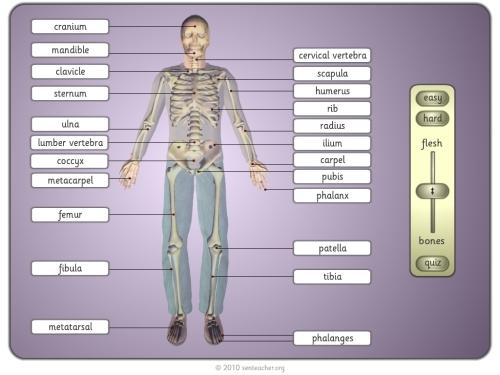 Anatomía humana |